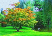 Orange Blossom - A Beginning Orange Blossom Sampler Pack - 3 Samples