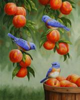 Peach - A Beginning Peach Sampler - 3 Samples