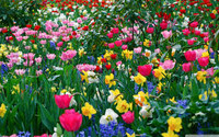spring fragrance sample decant