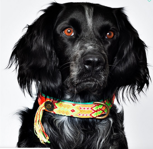 DWAM Ginger Dog Collar