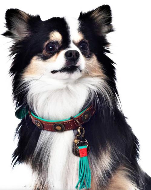 DWAM Urban Dog Collar