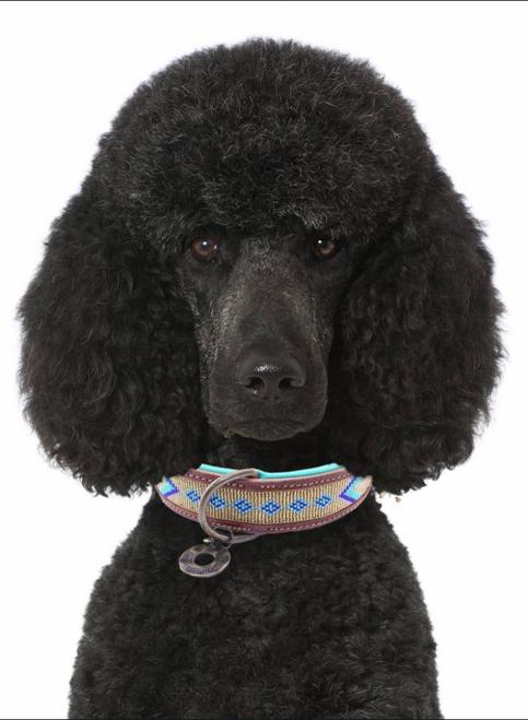 DWAM Indi Moon Dog Collar