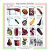 Honduras (2000) Native Musical Instruments Sheetlet of 20 & 2 Sheetlets of 6