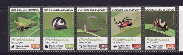 ECUADOR (2015): Insects- alchisme grossa- membracis foliata- cladonota apicalis (5)