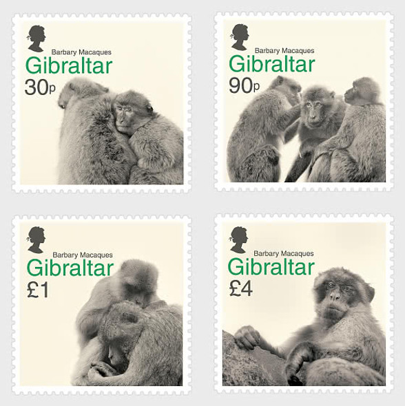 GIBRALTAR (2021)- Barbary Macaques (Primates)- 4v
