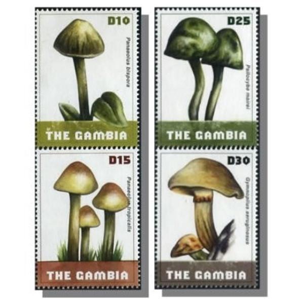 GAMBIA- Mushrooms 2009- D10-15-25-30 (4)