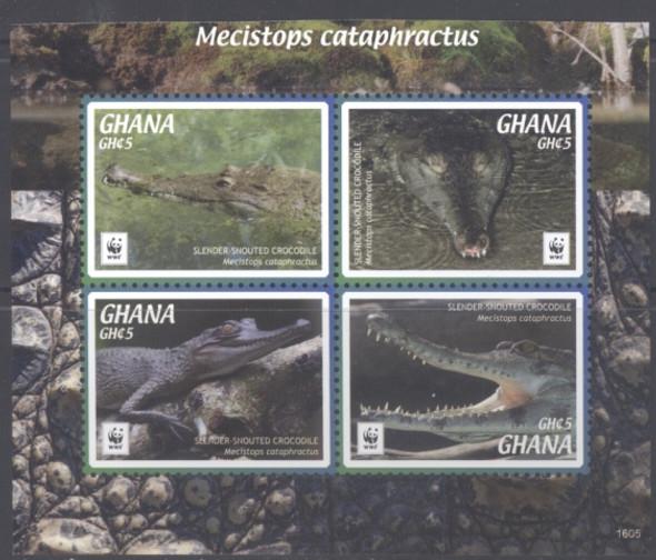 GHANA- WWF Crocodile 2016- slender snouted (4)