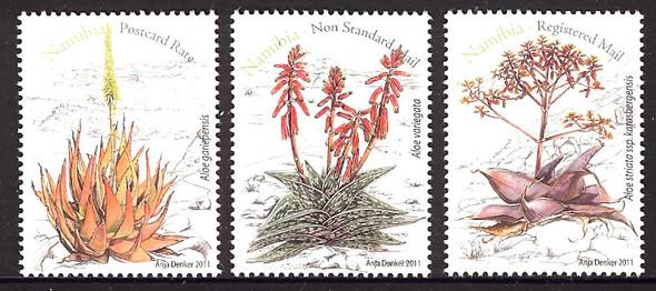 NAMIBIA- Aloe Plants (3)
