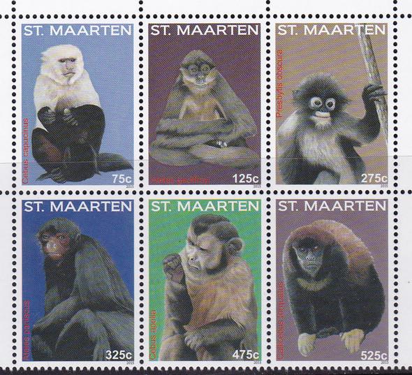 NETHERLANDS ANTILLES- ST MAARTEN Monkeys 2015 (6)