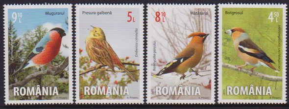 ROMANIA: Songbirds 2015 (4)