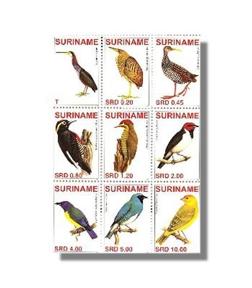 SURINAM- Birds 2007 (9)