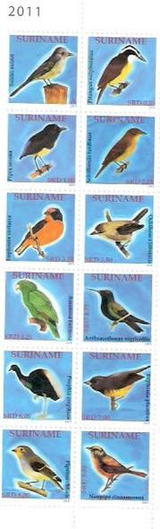 SURINAM- Birds 2011 (12)