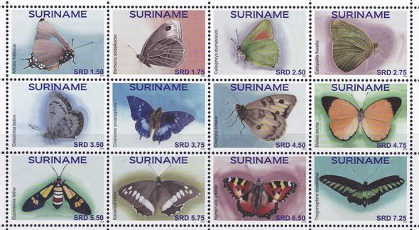 SURINAM: Butterflies 2016 (12)