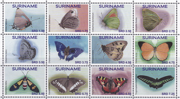 SURINAM: Butterflies 2016 (12)