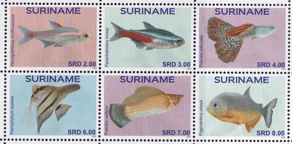 SURINAM: Fish 2015 (6)