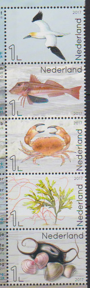 NETHERLANDS- Marine Life 2017- seabird- fish- crab etc (5)