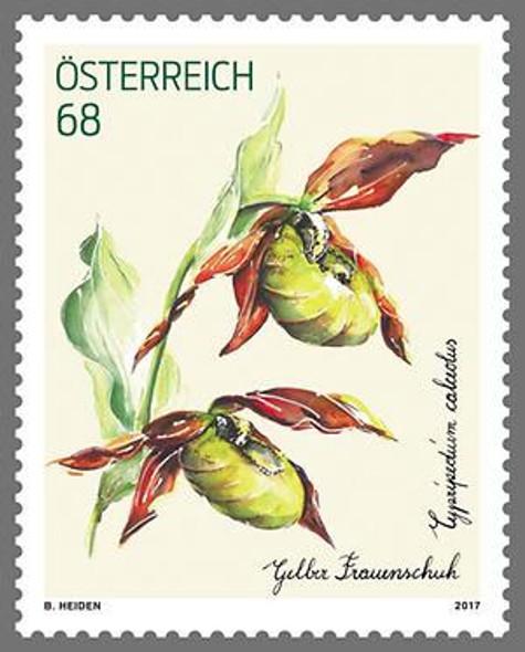 AUSTRIA- Orchid 2017- Cypripedium calceolus