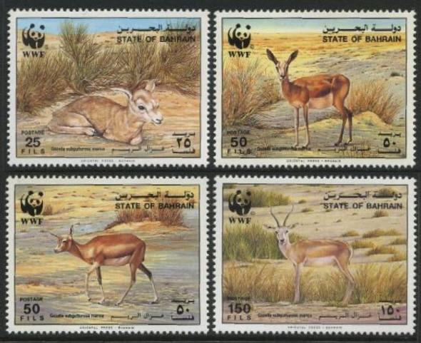 BAHRAIN- WWF- Gazelles (4)