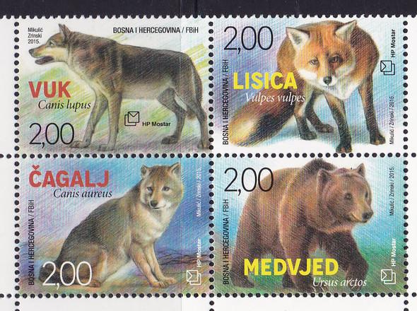 BOSNIA- CROAT Fauna 2015- bear- fox- wolves (4)