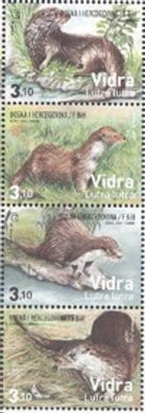 BOSNIA: CROAT (2013)  European Otters (4)