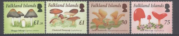 FALKLAND ISLANDS: Mushrooms 2014 (4)