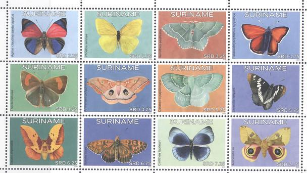 SURINAM: Butterflies 2015 (12)