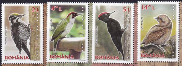 ROMANIA- Woodpeckers 2016 (4)
