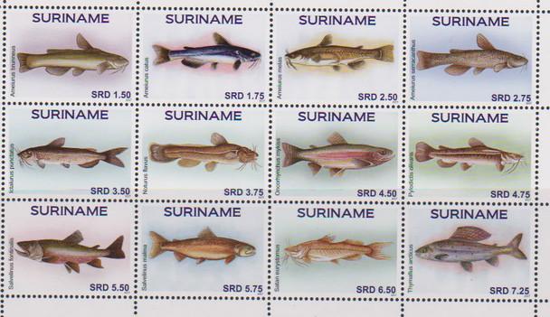 SURINAM- Fish 2017 (12)
