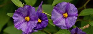 Native Tree Flowers