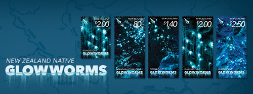 New Zealand Native Glowworms