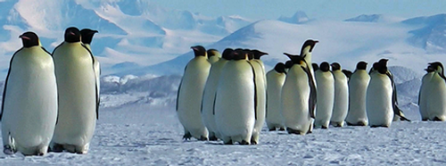 2001 Ross Dependency - Penguins
