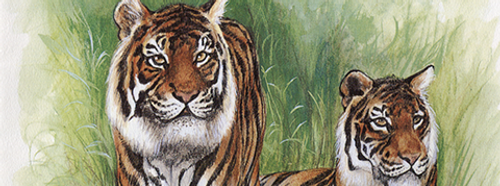 1998 Year of the Tiger - Favourite Felines