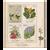 2021 Sarah Featon - Botanical Artist Used Miniature Sheet