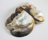Black Lip Mother of Pearl Shells