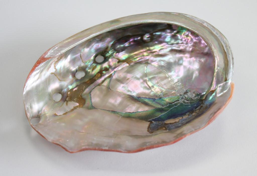 Inside of Large Polished Red Abalone