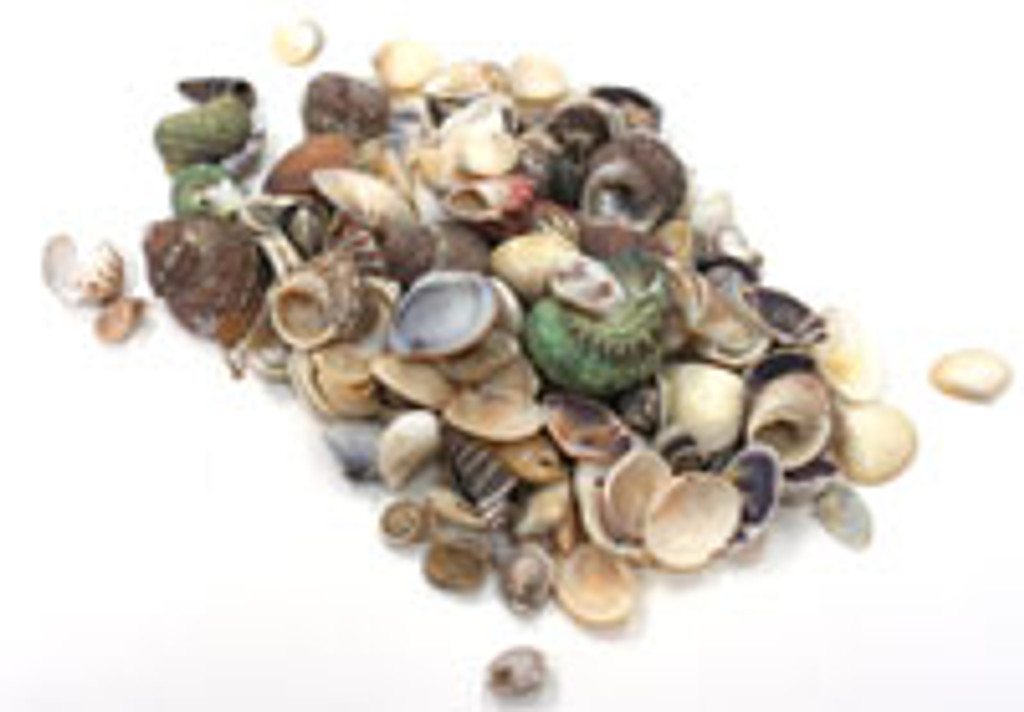 Small Philippine Shell Mix 1kg