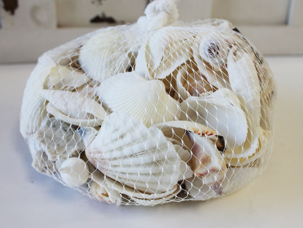 Off White Seashell Mix