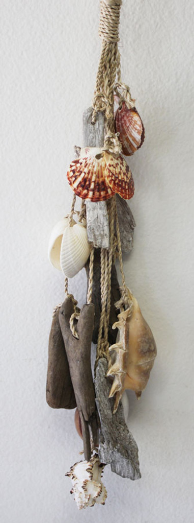Driftwood Shell Cluster