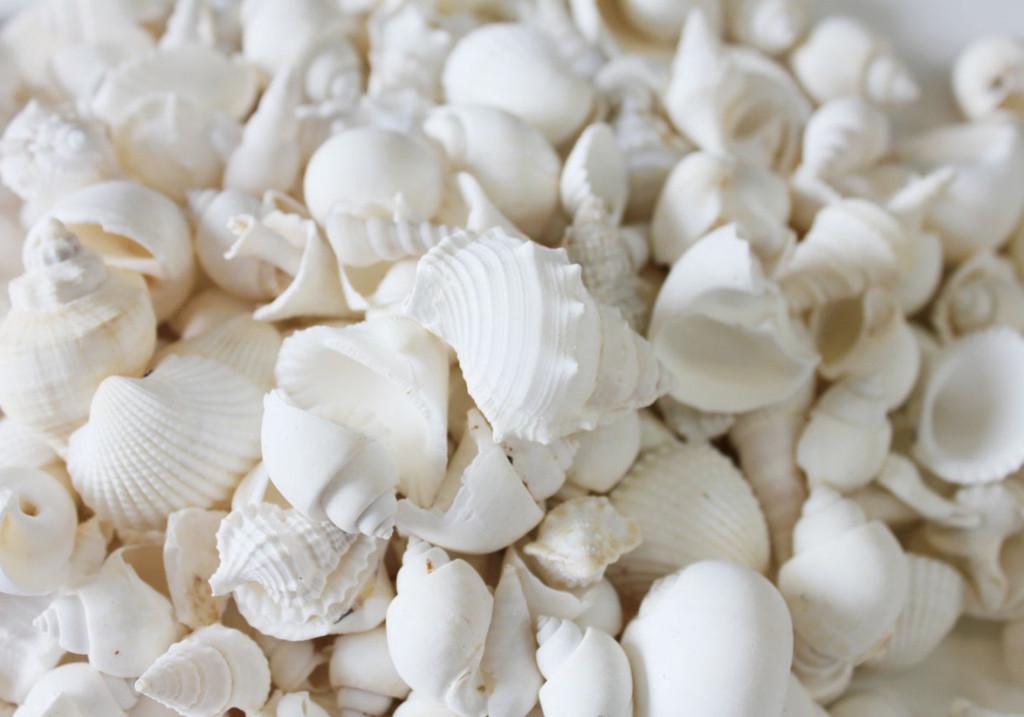 Small White Mix Closeup