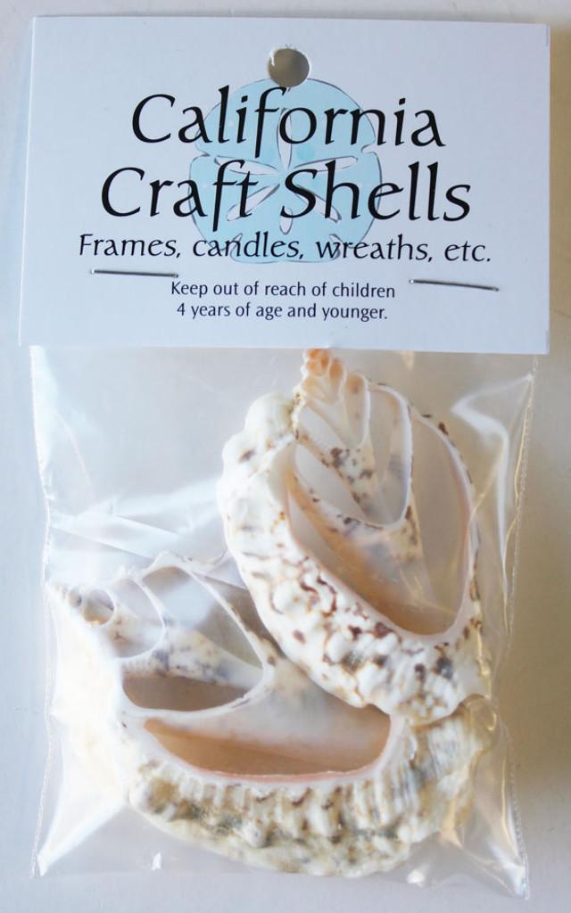 Cut White Conch Shell Craft Bag