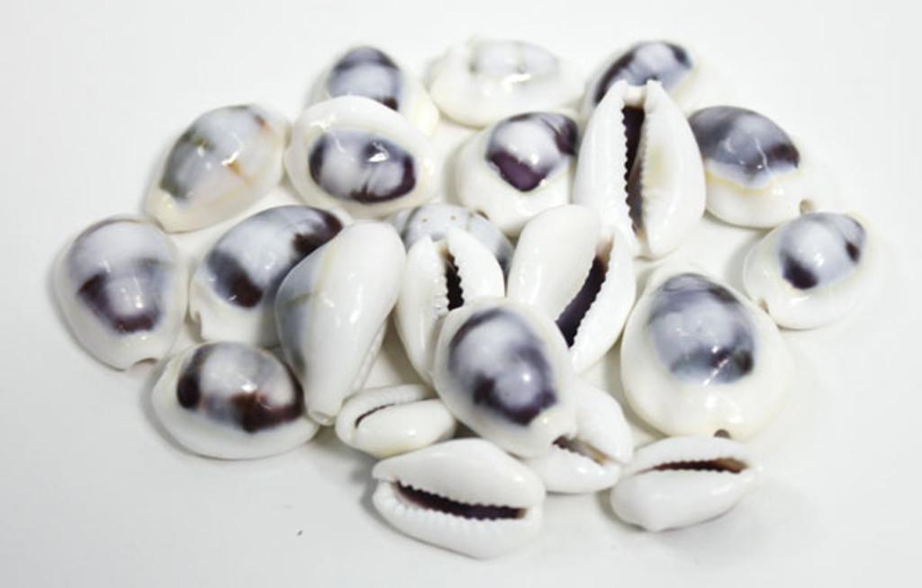 White & Purple Cowries - 50 Pieces