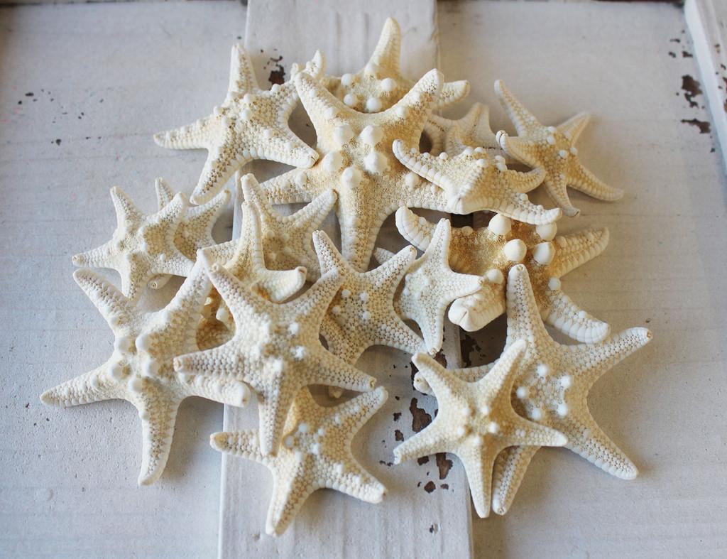 "1-2"" White Thorny Starfish - 100 Pieces"