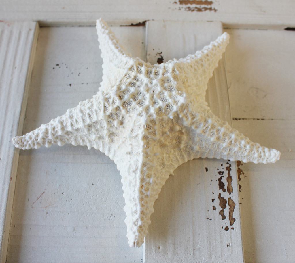 White Bahama Starfish