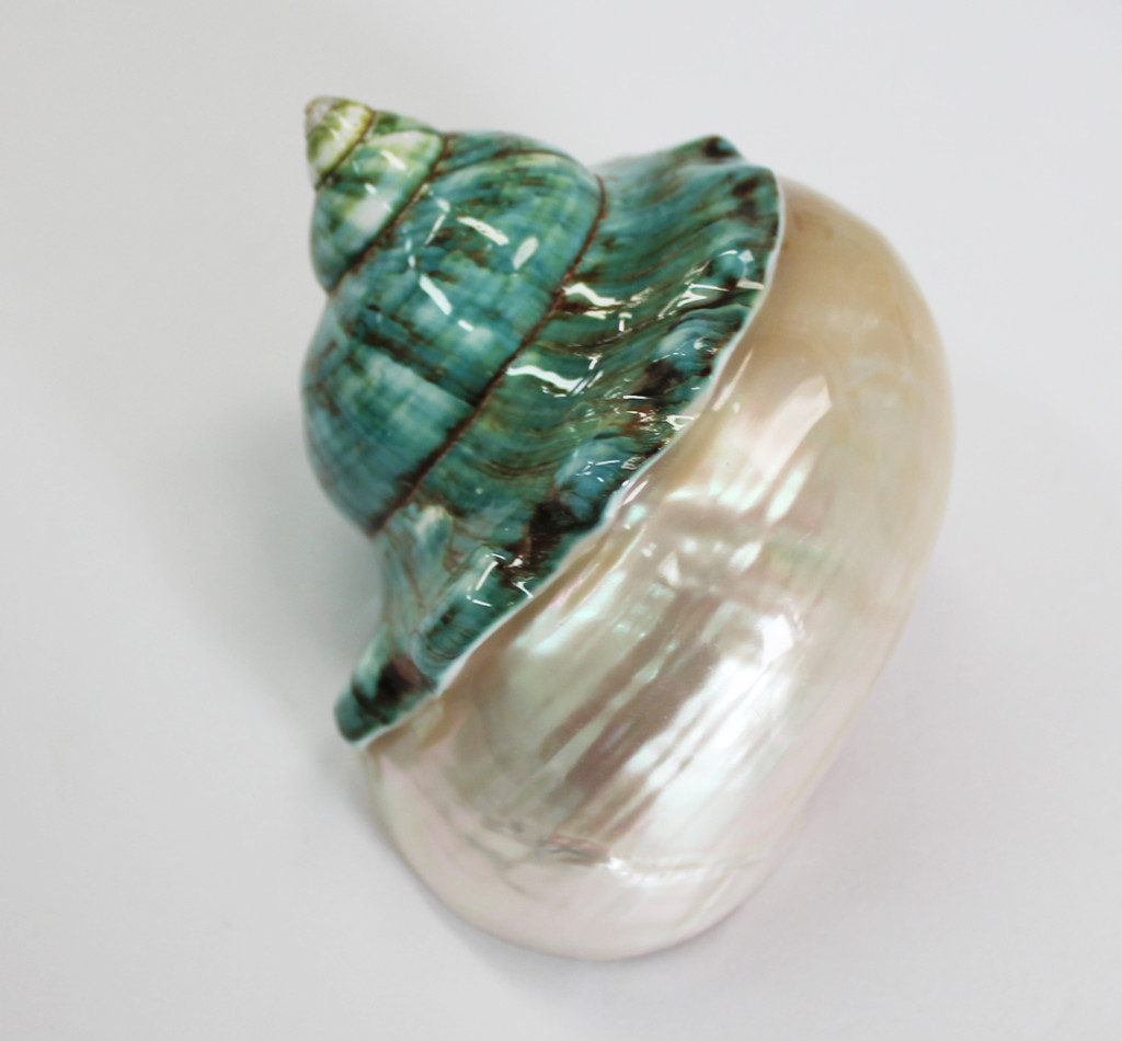 Jade Top Turbo Shells