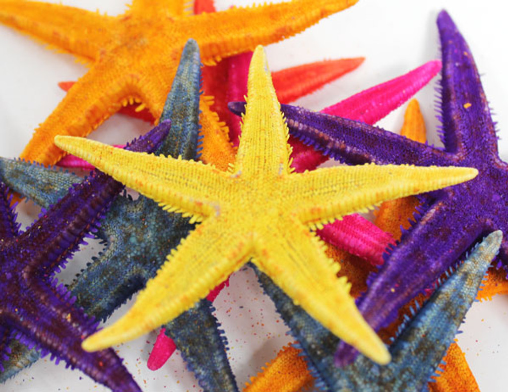 "2-3"" Colored P.I. Starfish - 50 PIeces"