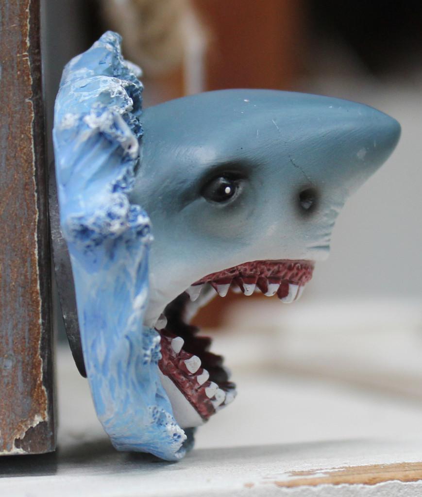 3D Shark Magnet
