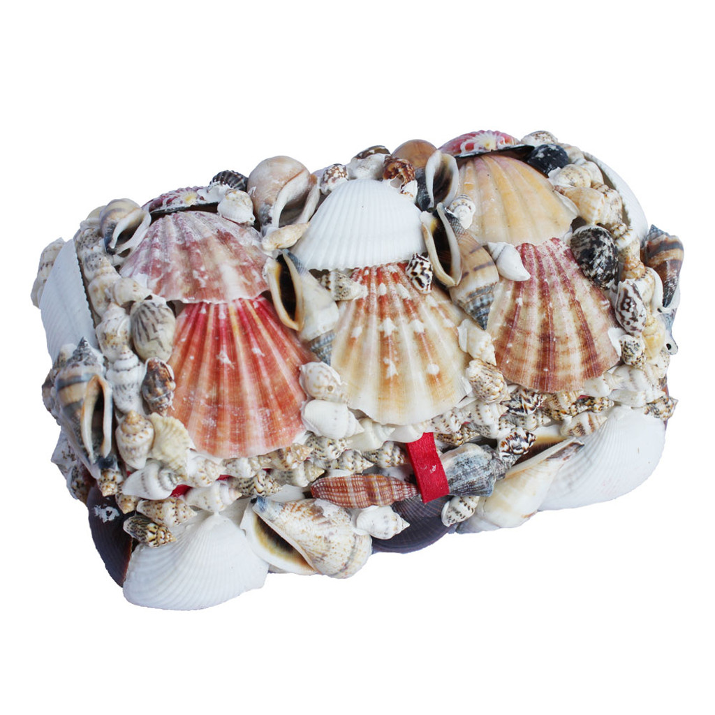 Natural Seashell Treasure Chesst