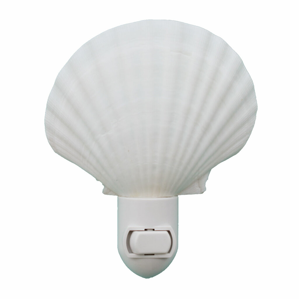 Irish Scallop Seashell Night Light