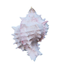 Large Pink Murex Glitter Ornament