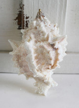 Large Pink Murex Seashell Glitter Ornament